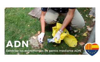Moción para solicitar la implementación del sistema para detectar los excrementos de perros mediante ADN